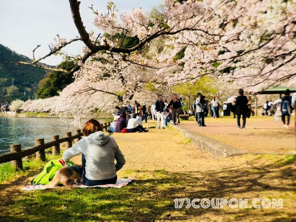 主人帶著愛犬來海津大崎休閒野餐