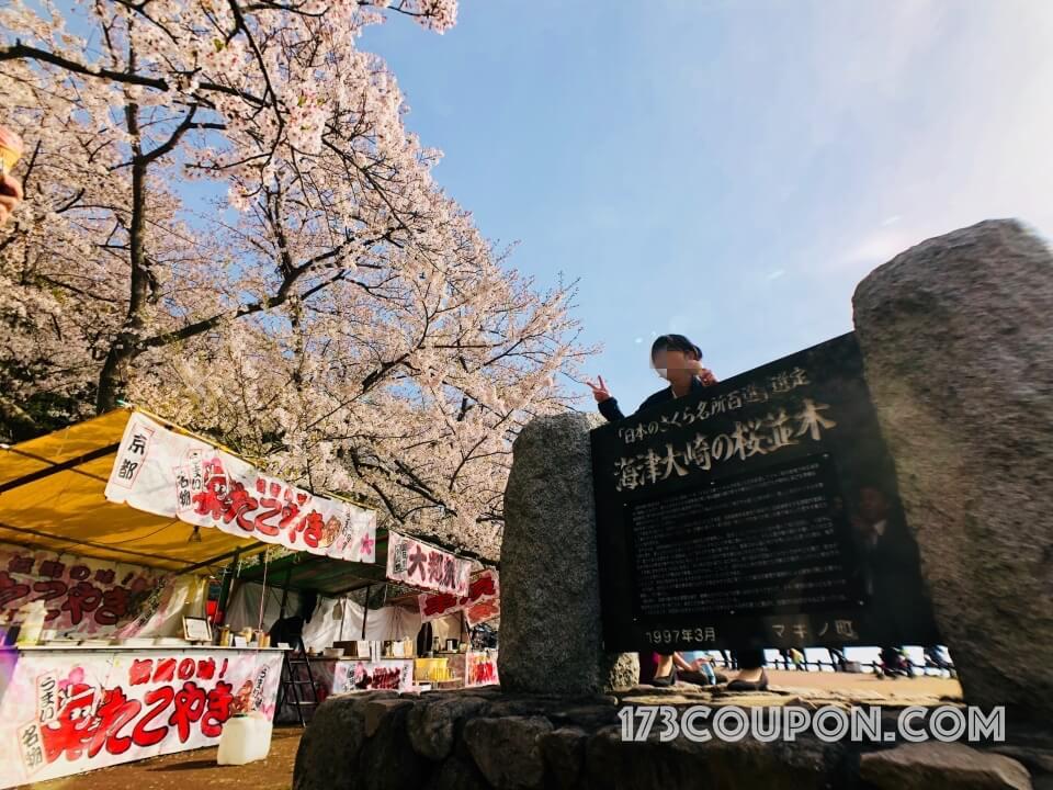 海津大崎の桜並木 日本百大賞櫻名所