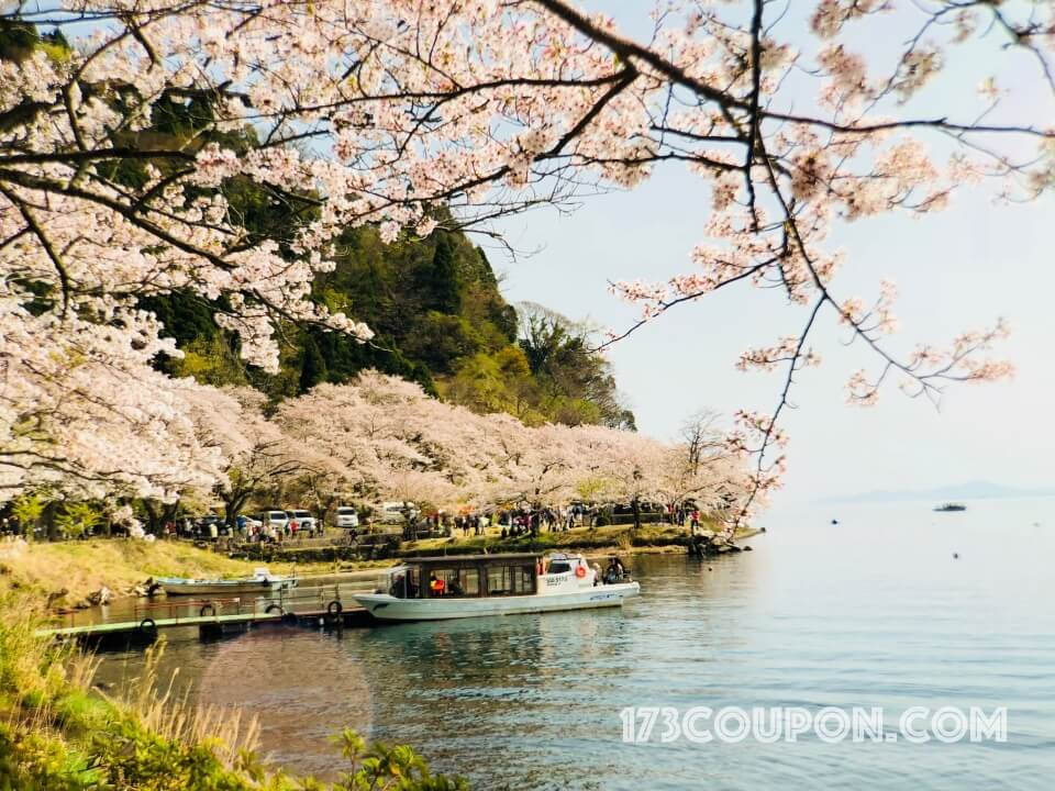海津大崎の桜花見船